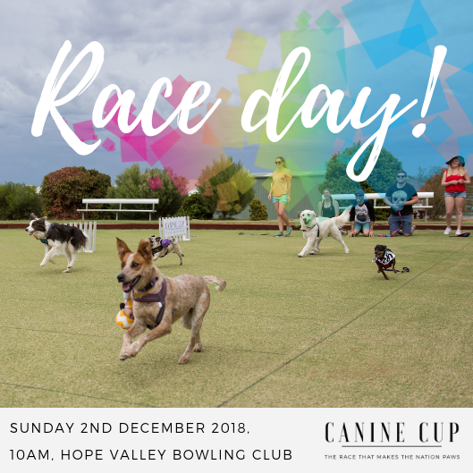 Adelaide-Canine-Cup-Races-Filming-December-2018-Announcement.png#asset:46500