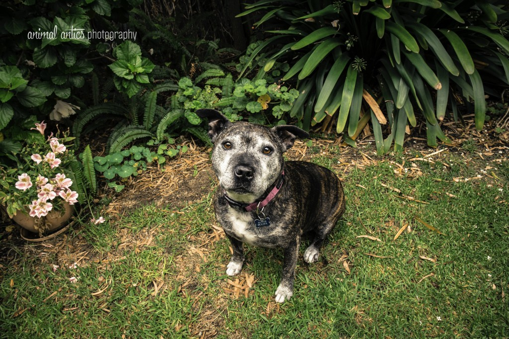 003 DOGSHARE Animal Antics Photography Guest Blog